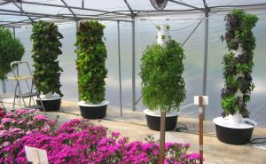 Greenhouse Guidance for Growing Food in Winter